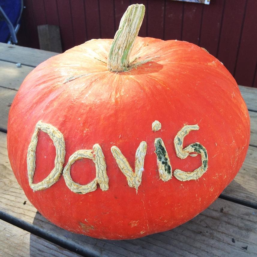 2014-pumpkin-scratching-davis