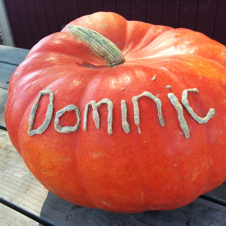 2014-pumpkin-scratching-dominic