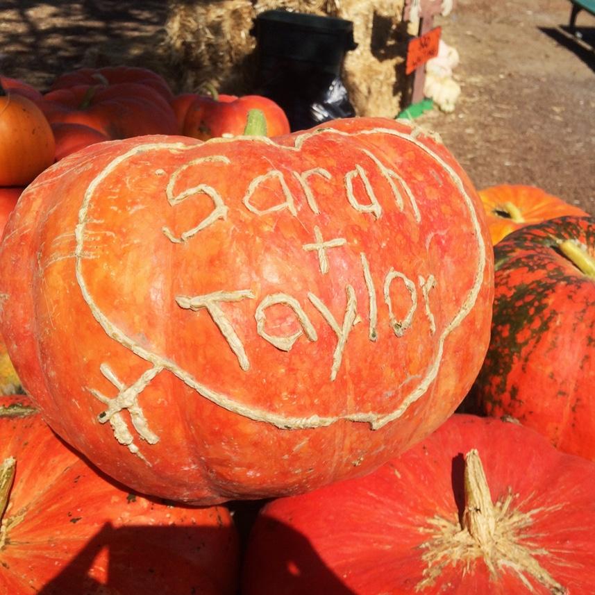 2014-pumpkin-scratching-sarah-and-taylor